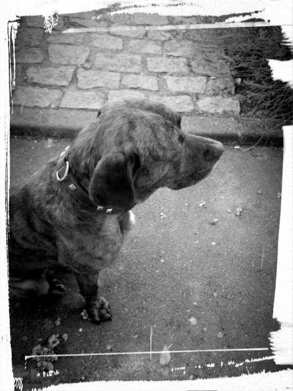 Doggy !!!