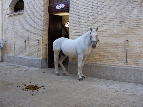 Quelques chevaux