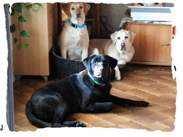 Un article pour démarrer votre petite promenade :  Le blog, Les chiens & La fille.