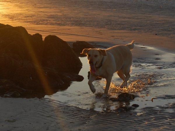 « Un chien est le rayon de soleil d'une vie. »