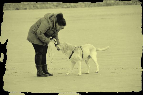 « Un chien ne meurt jamais... » - Chouki ♥