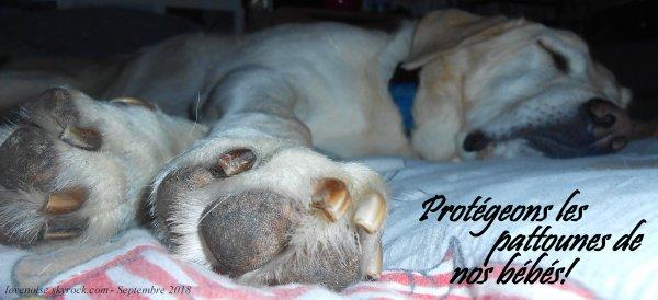 Prenons soins des pattounes de nos chiens...