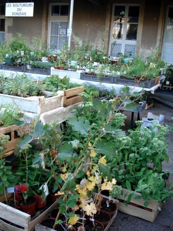 plantes exposées