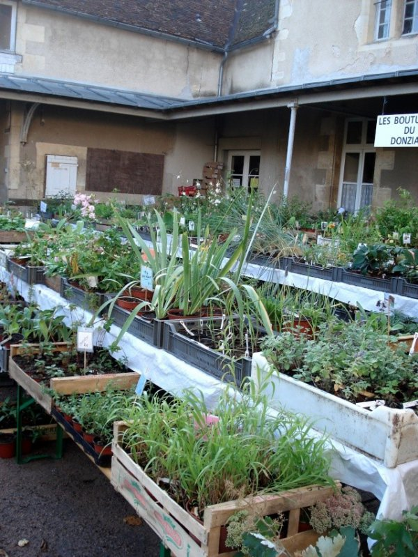 plantes en expo
