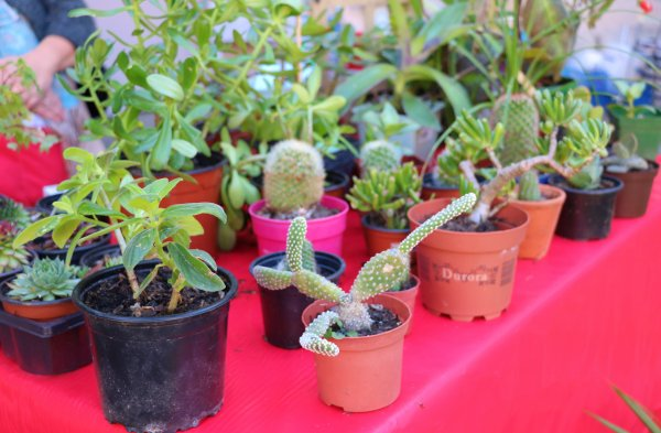 notre foire aux plantes 2018 suite
