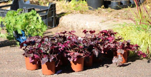 FOIRE AUX PLANTES  18 SUITE