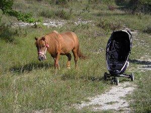 Sur les chevaux