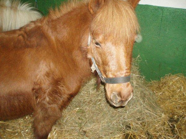 > Après 60 minutes d'équitation, l'homme dit qu'il a fait une heure de cheval, le cheval, lui, doit se dire qu'il a fait une heure d'homme.