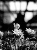 Photo de Peace-flowers-smille