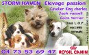 Photo de stormhaven-chiots