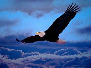L'aigle noir <3