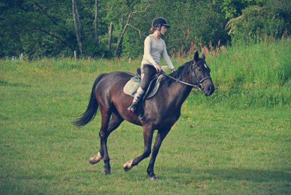 BBHORSE♥♥