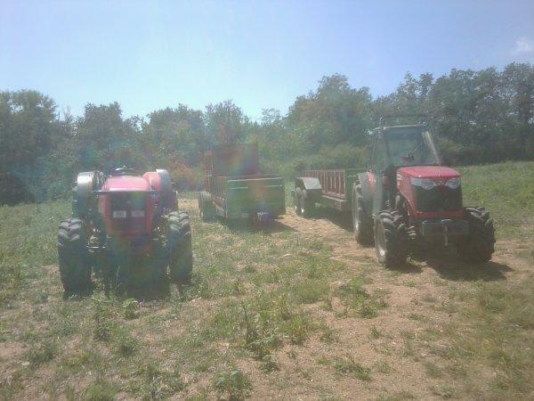 Courgettes 2011 - MF 3435 + VRB & MF 3635 + VRB - 04 Août 2011 - 1 / 2