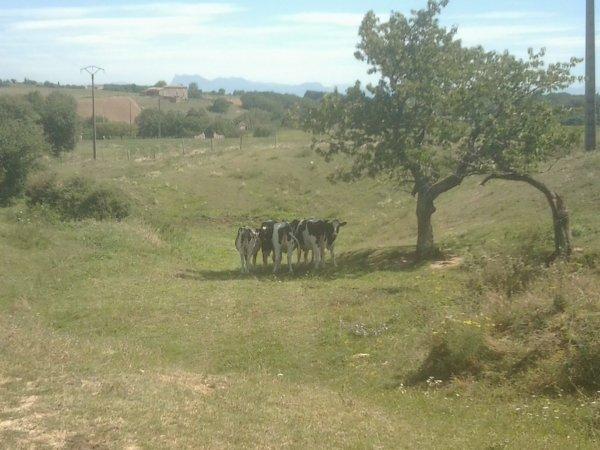 Photos agricoles en VRAC !