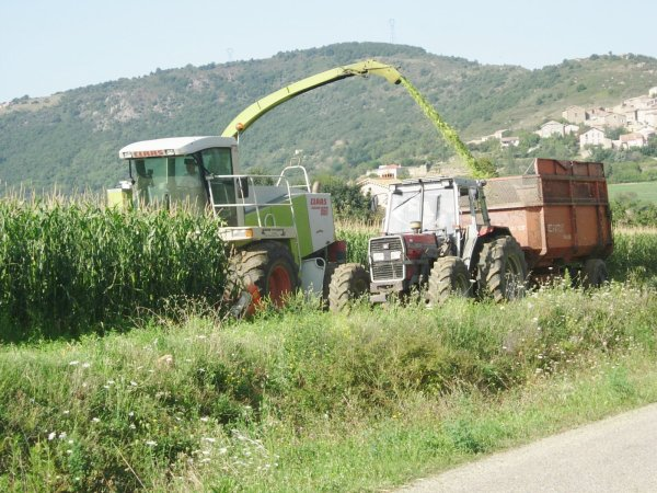 ENSILAGE DE MAIS 2011 - 22/08/11