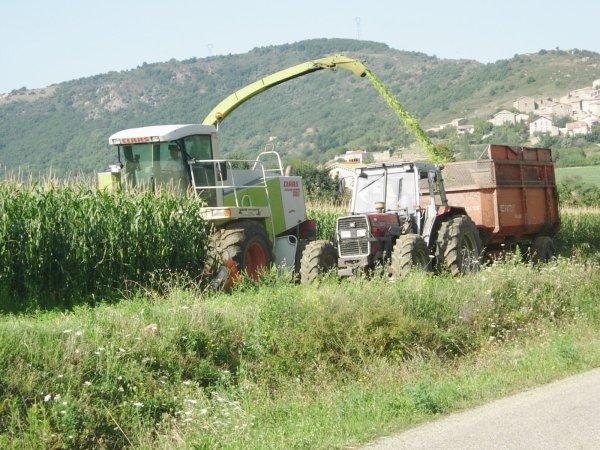 ENSILAGE DE MAIS 2011 MF 375  - 22/08/11