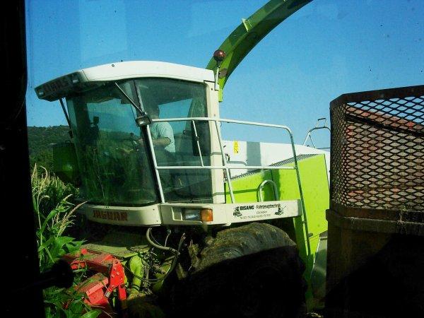 ENSILAGE DE MAIS 2011 MF 5435 - 22/08/11
