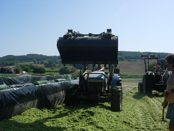 ENSILAGE DE MAIS 2011 NEW HOLLAND TN75S + FORD 4830 - 22/08/11