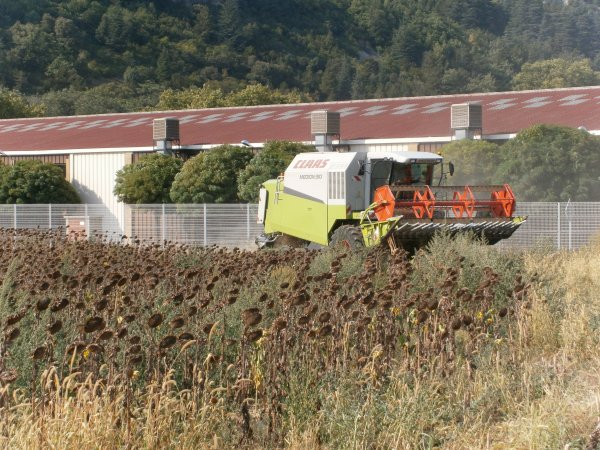Moisson 2011 Tournesol - Claas MEDION 310 & C 420 - 25 Aout 2011