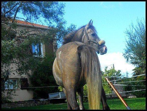 |[ Chapitre 7 ]| • .Le cheval enseigne à l'homme la maitrise de soi,& la faculté de s'introduire dans les pensées et les sensations d'un autre être vivant .  .
