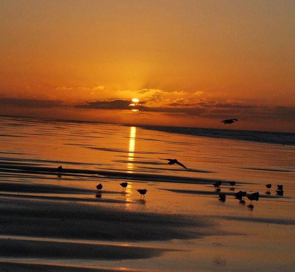 Naviguer au grès du vent,au creux des vagues...