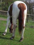 Photo de Manon-Horse94