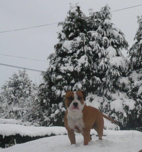 sortie sous plein de neige......