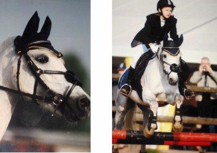 ♞› Il n'y aura jamais de secrets plus intimes que ceux d'un cheval et de son cavalier.
