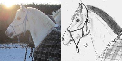 """♞› """"Etre heureux à cheval, c'est être entre ciel et terre, à une hauteur qui n'existe pas."""""""