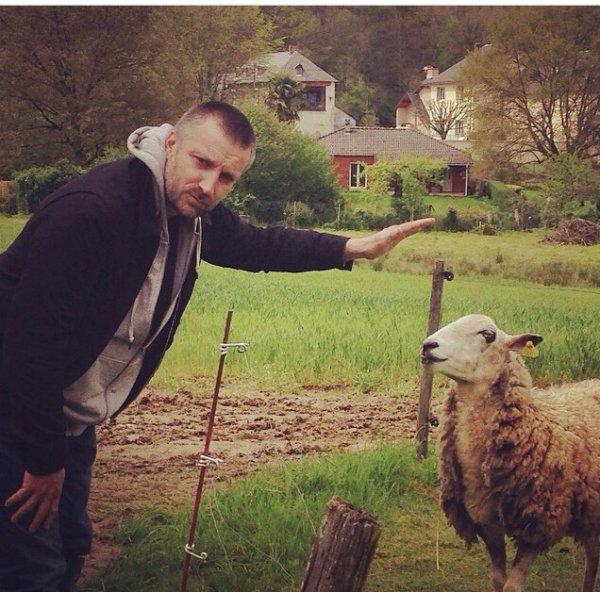 Fred dresse les moutons