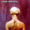 Coeur-anatomy
