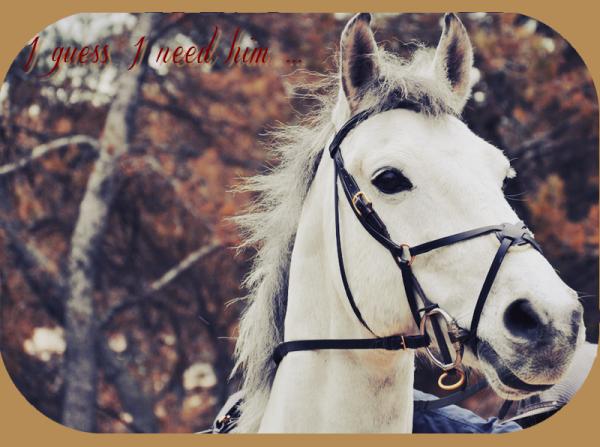 On oublie bien souvent que l'équitation est un art, et l'art est basé sur l'amour. L'équitation c'est la sublimation de l'art par l'amour.