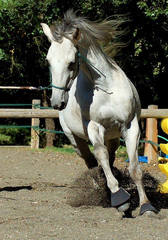 Il faut se fondre dans son cheval jusqu'à en sentir le sol sous ses sabots, alors, seulement on devient cavalier