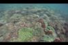 Snorkeling à Coral Cove