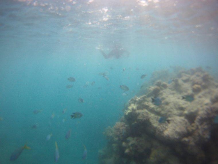 Snorkeling aux Whitsundays