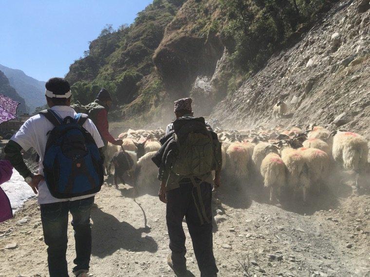 Trek - fin du tour des Annapurnas
