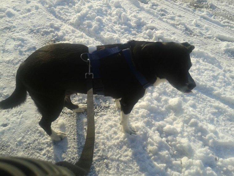 Ma chienne Tara (mon gros bébé et ma toutoune)