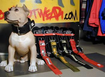 collier pour chien bullrot wear