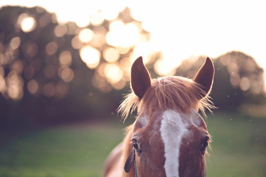 Blog de ranch-du-tennessee
