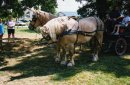 Photo de xo-les-chevaux-xo