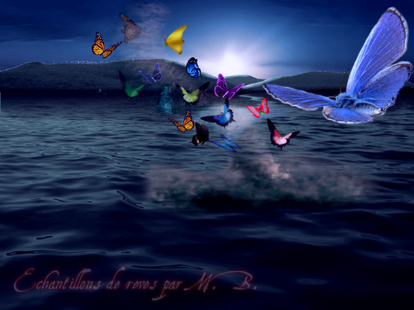 une mer de papillions