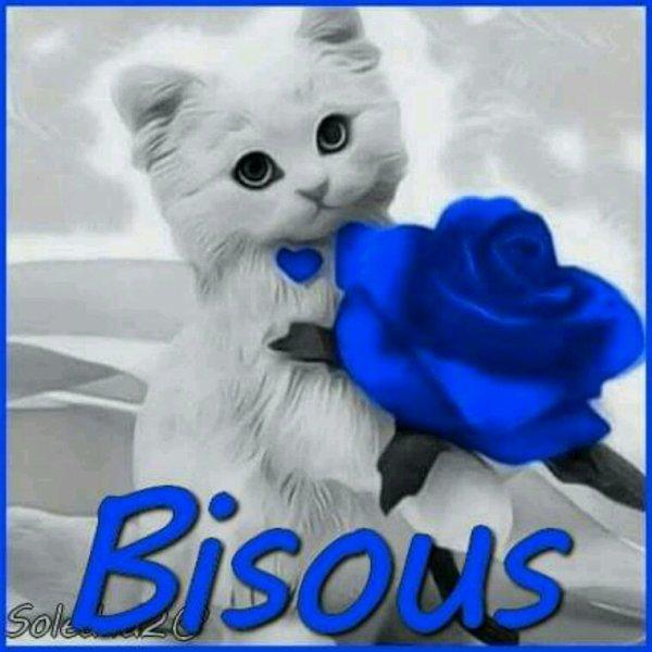 Bisous miaou