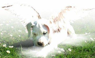 La solution n'est pas de jeter un chien à la rue, mais de l'éduquer alors prenner en consience !