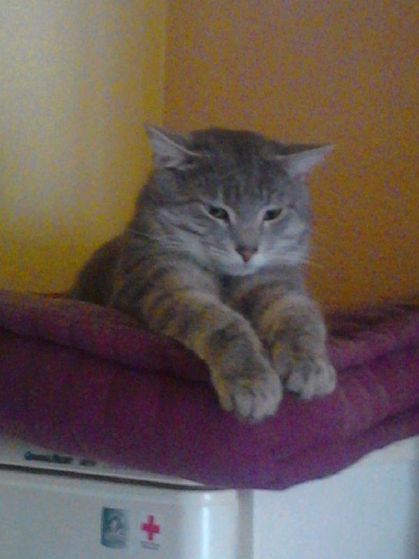 mon chat guizmo
