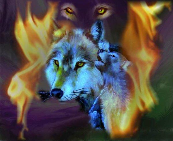 Magnifique cette image du loup
