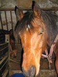 Photo de les-chevaux-notre-reve
