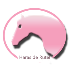 • Welcome to the Haras de Rutel •