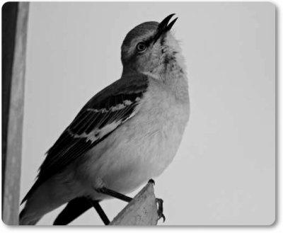 innocence in to kill a mockingbird