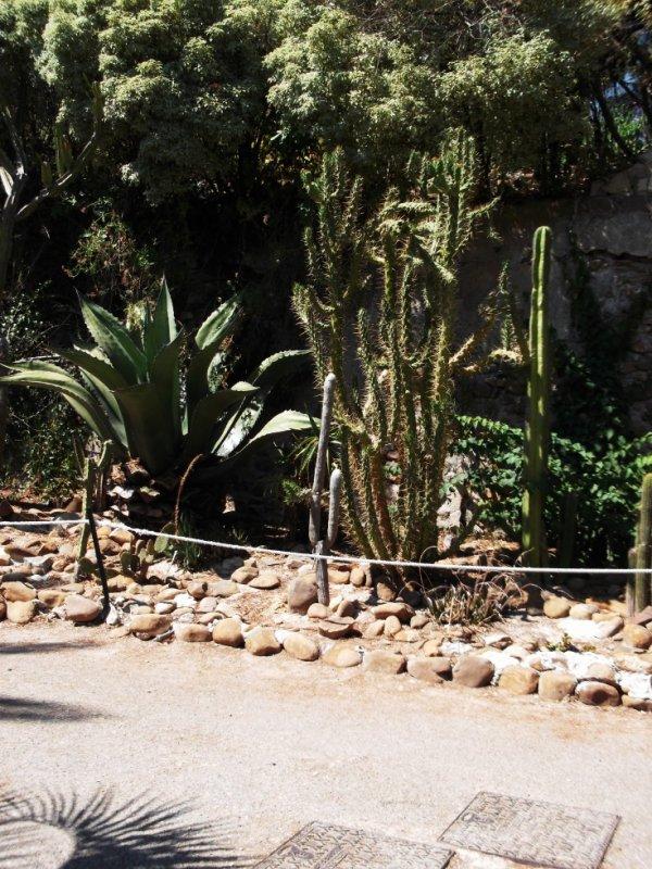 cactus encore