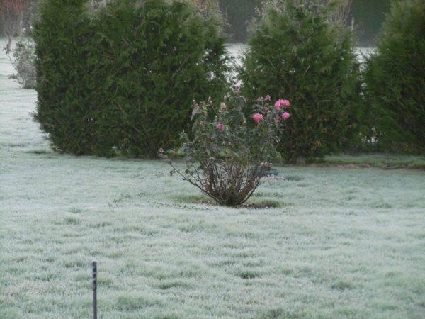 gelée en Normandie